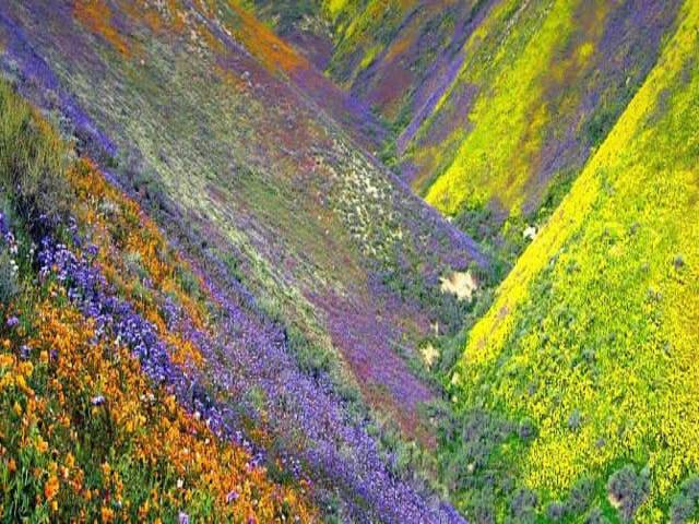 Valley of Flowers, pic courtesy Amazing India Blog
